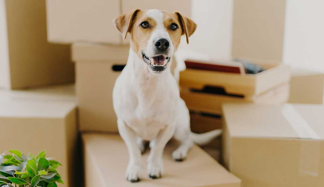 The Challenges of Moving with a Pet and How to Alleviate Them
